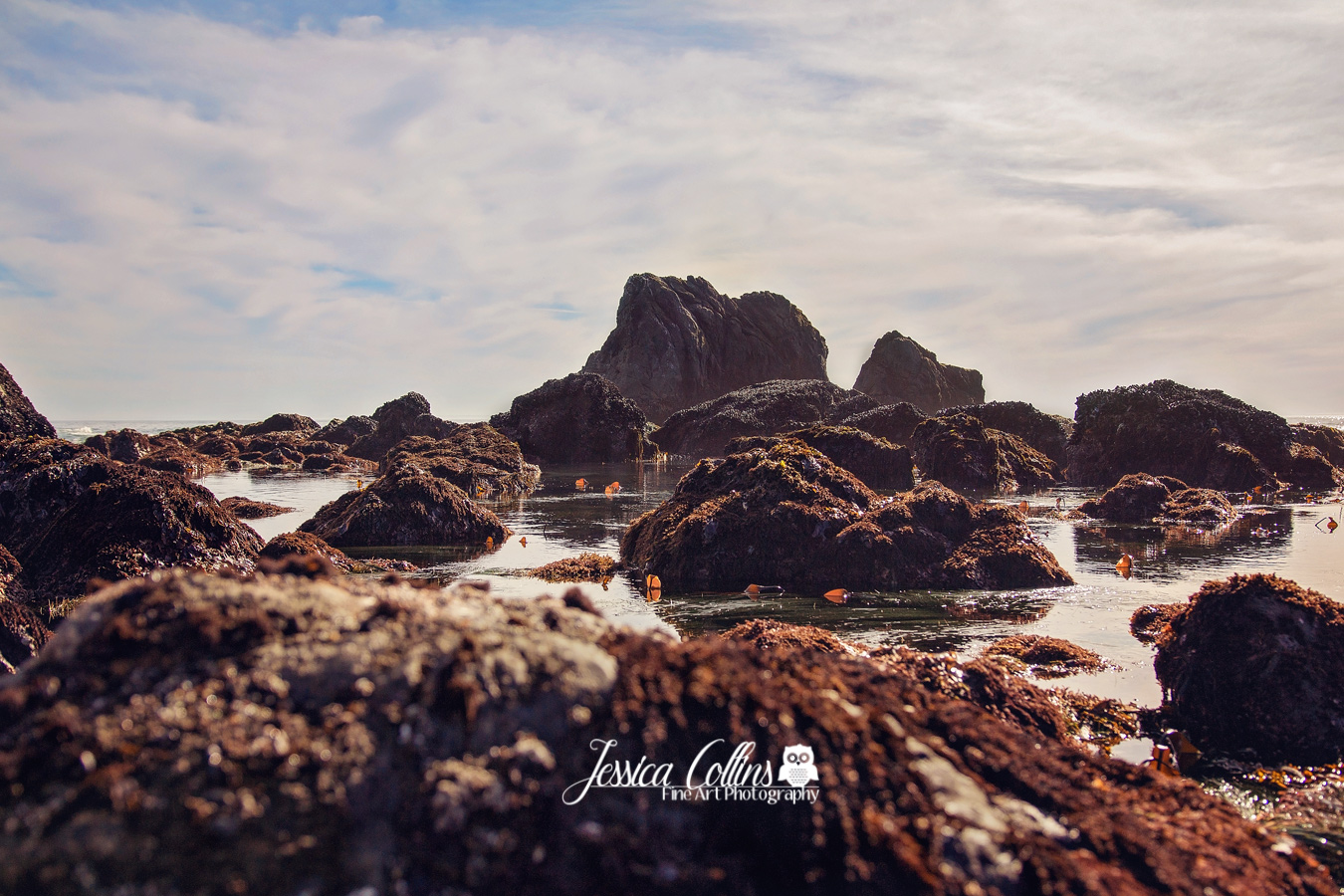 Sonoma Coast, California Beaches, Sonoma County Photographer