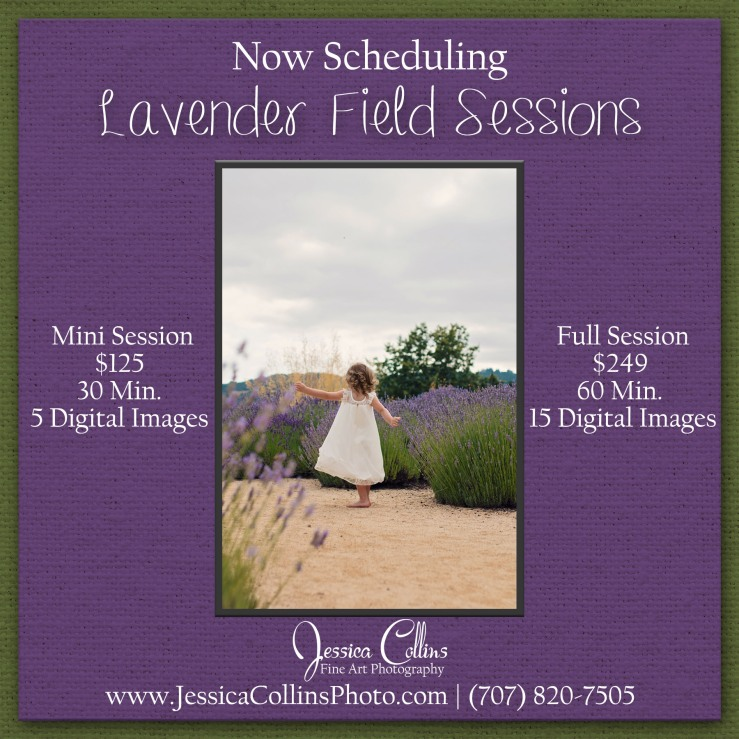 Guerneville Ca Photographer, Lavender Field, Photo Sessions