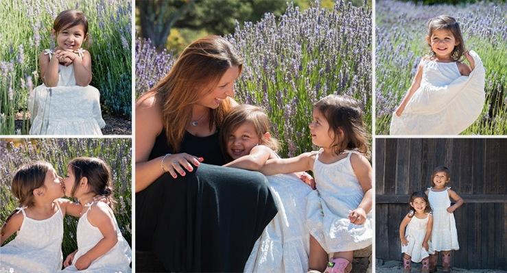Lavender field Photo sessions in Sonoma County California